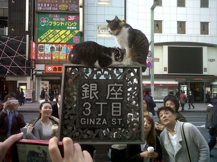 cool cats in ginza